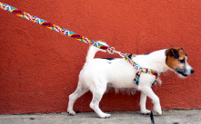 Shop Dog Leashes by Yellow Dog Design.