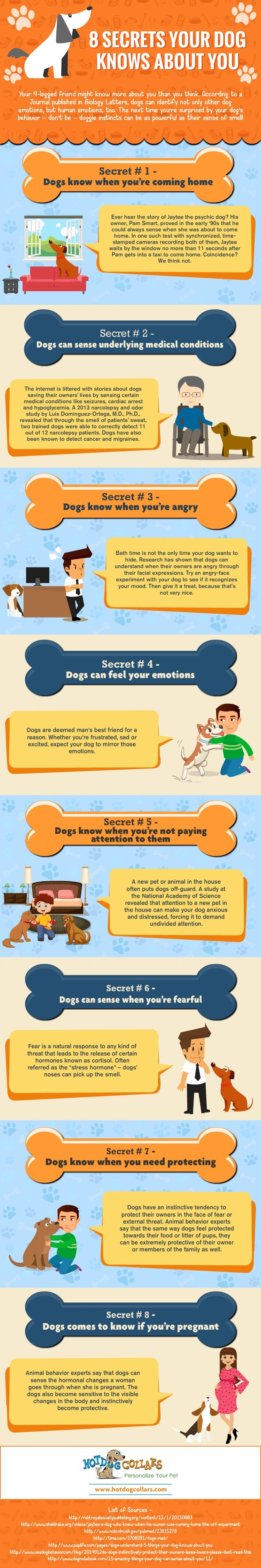 8 Secrets Your Dog Knows About You