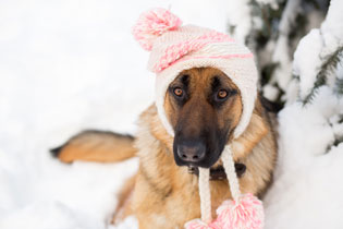 keep dogs warm in winter