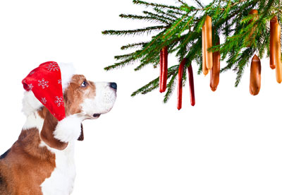 Christmas Dangers for Pets