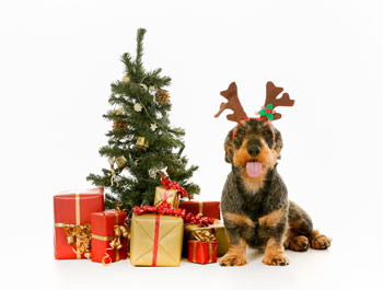 Keeping Your Dogs Safe This Holiday Season
