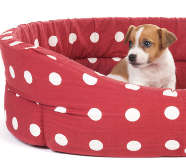 cute dog beds
