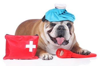 keep a first aid kit for your dog in your home