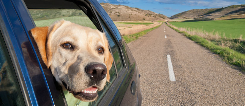 Creative ways to get dog hair out of the car