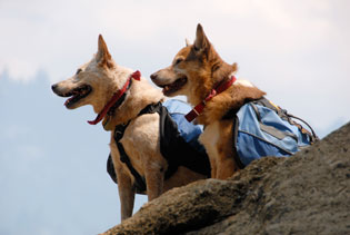 hiking dogs
