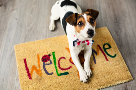 greeting spot for dogs to avoid damage to hardwood floor