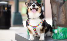 Shop personalized harnesses.