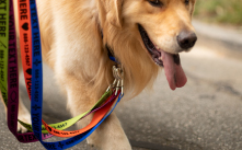 Shop personalized leashes.