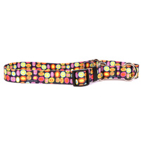 Bright Fun Martingale Dog Collar