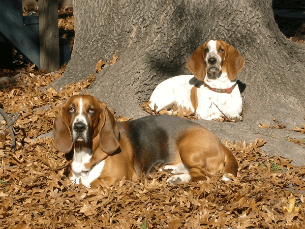 dog-family-tree.png