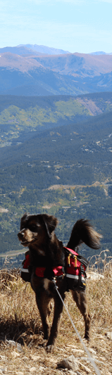 dog-in-outdoor-mountains.png